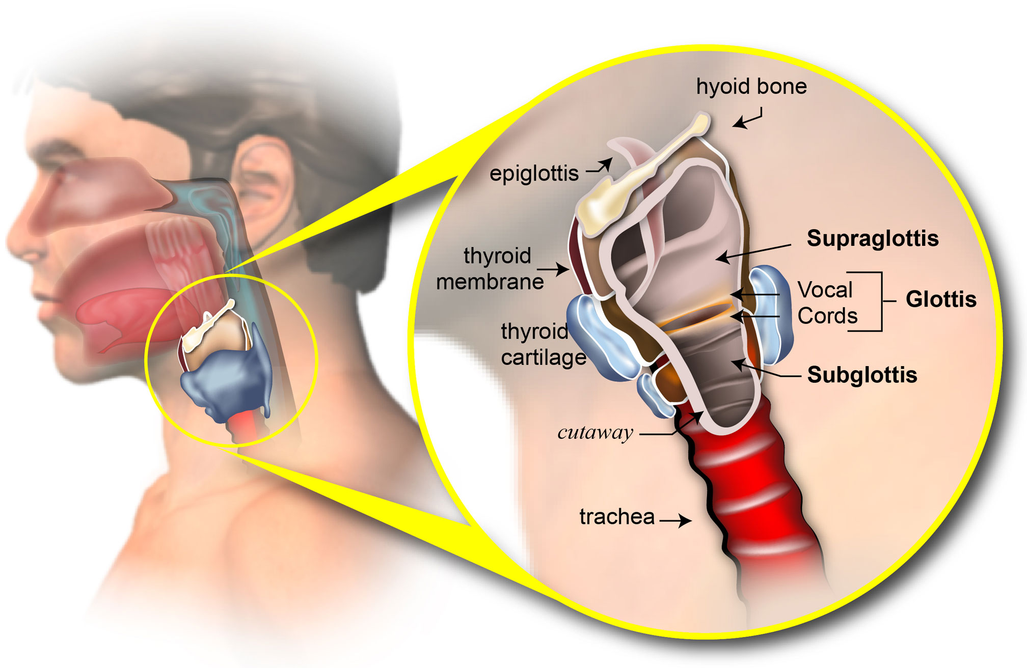a study of larynx cancer